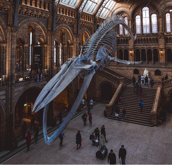 מוזיאונים בלונדון